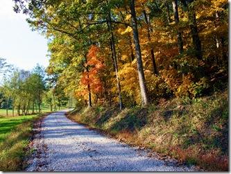 autumn_scene-544